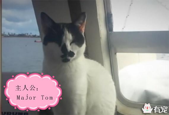 有宠福布斯: 别说猫不亲人了,看它为你做了多少事