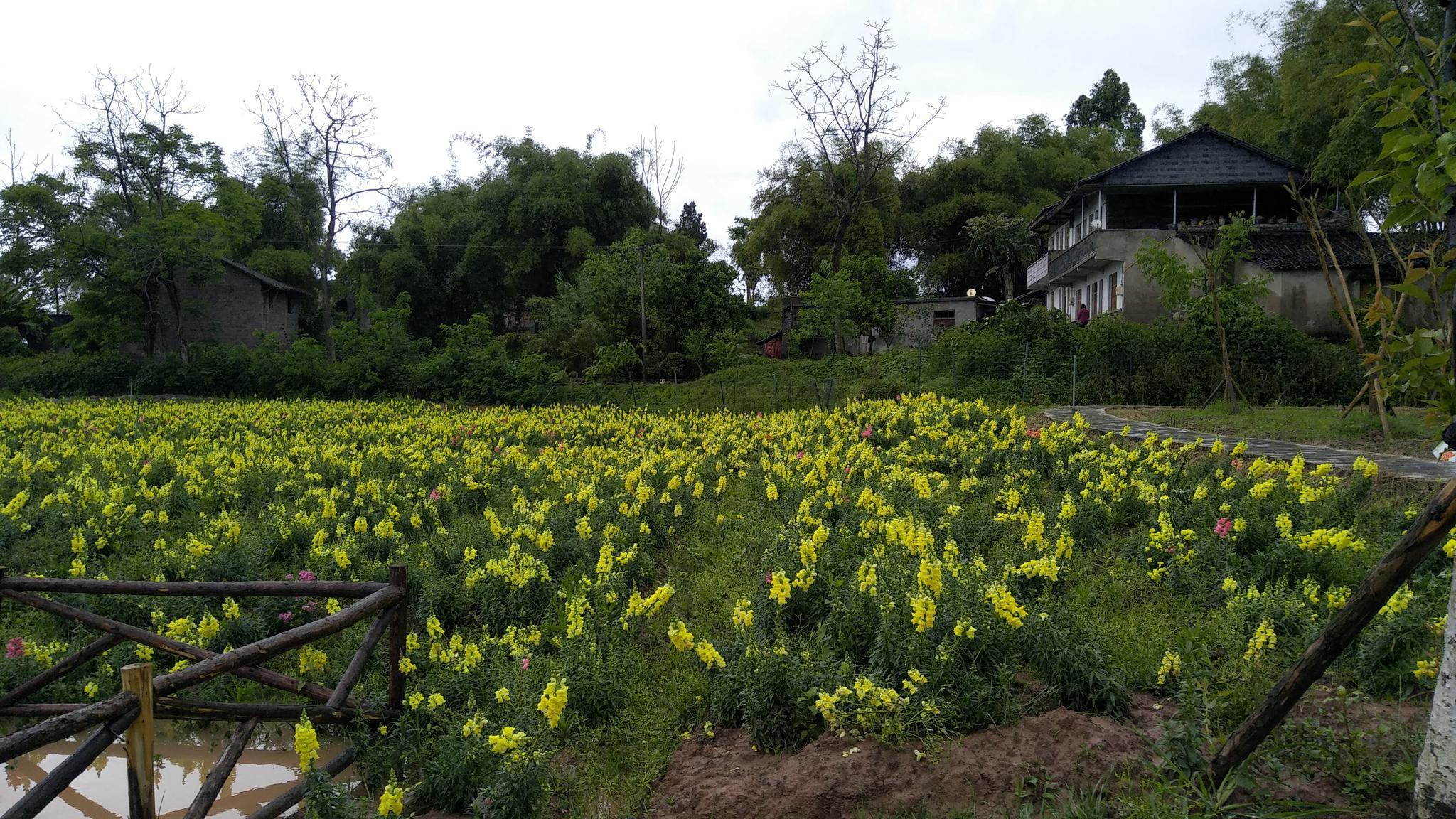 雨后的银城花海 淡淡青草味 怡人的花香