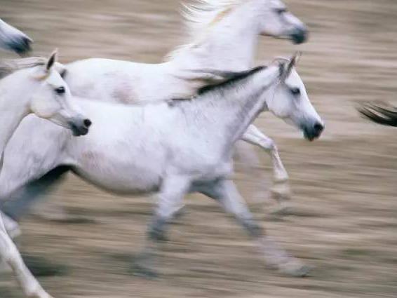 梦到骑白马掉下来了