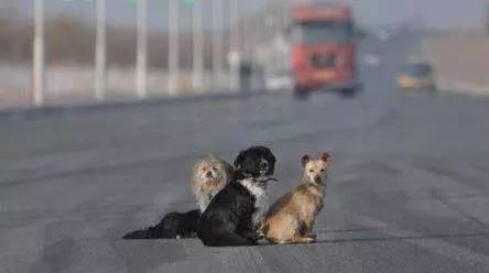 高速遇见狗,是撞?还是躲?无意阅读救自己一命!