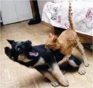 同时养猫和狗是一种什么体验?