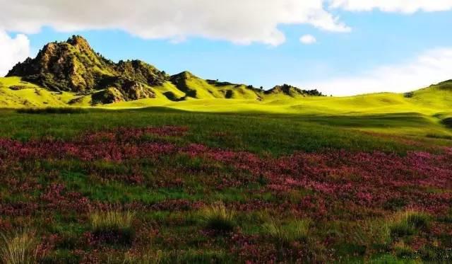 激情海西州 饕餮青海湖油菜花 穿越哈拉湖11日自驾游