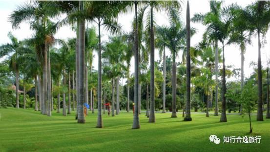云南 | 西双版纳热带植物园马拉松,报名就送超值大礼包!