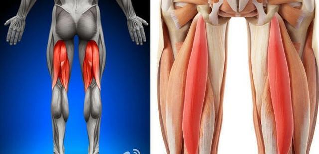 大腿后侧肌群强化3个动作 完善腿部力量增强跑步力