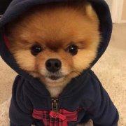 广西单身狗代表