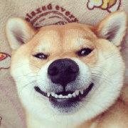 笑出腹肌的狗哥