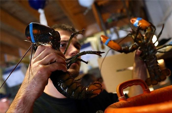 在华的美国人感叹:小龙虾入侵中国失败很必然