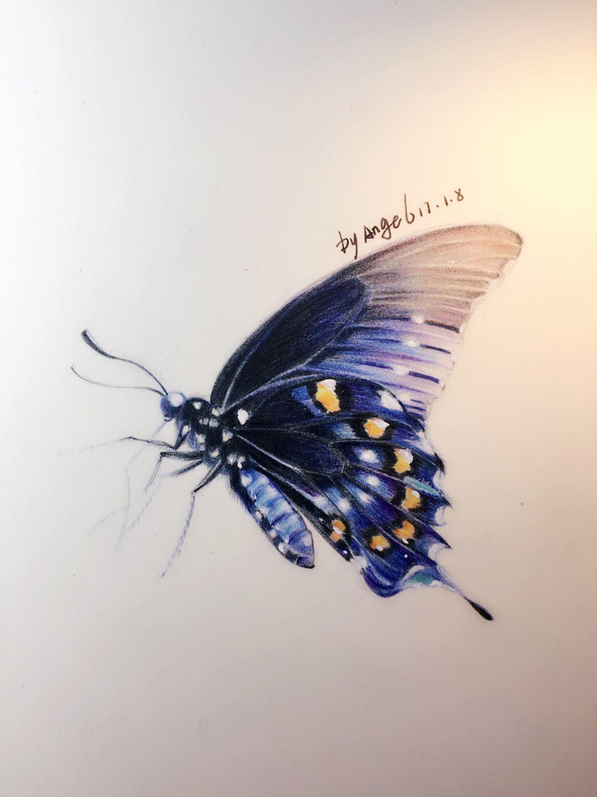 彩铅手绘教程,蝴蝶,适合初学者练习色彩感
