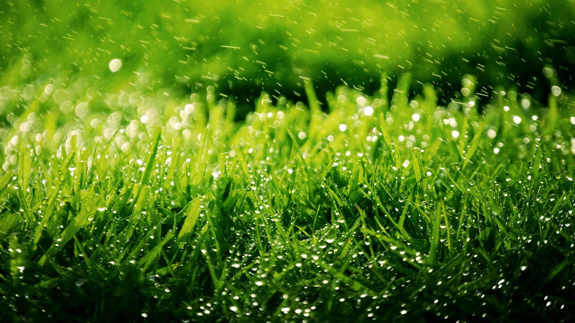 绿色清新稻苗护眼壁纸风景桌面_新浪看点