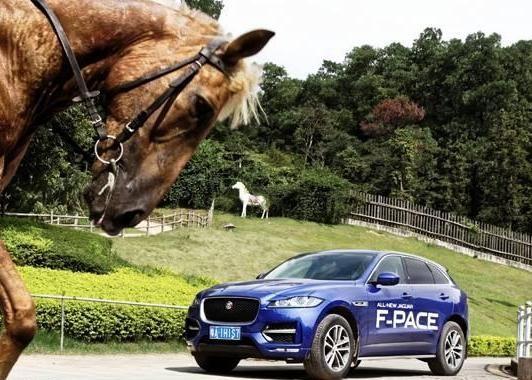 运动型SUV的另一种打开方式,你知道吗?