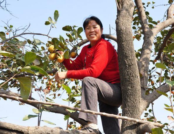 """农村一种有益心脏健康的""""水果王"""", 养生价值极高"""