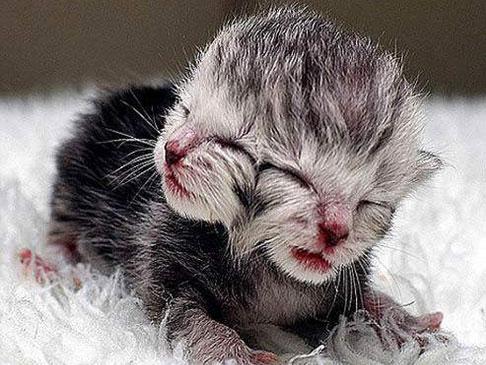 """重庆一只畸形""""双面小猫"""" 生下竟有2张嘴巴、4只眼睛"""
