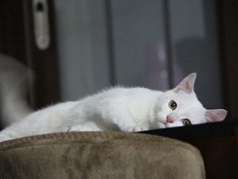 泪奔!悲伤猫咪试图挖开饲主坟墓 被人阻拦后瘫倒在地不愿离开