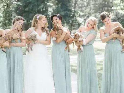 美国新娘抱着小狗走婚礼红毯 还为流浪狗打广告