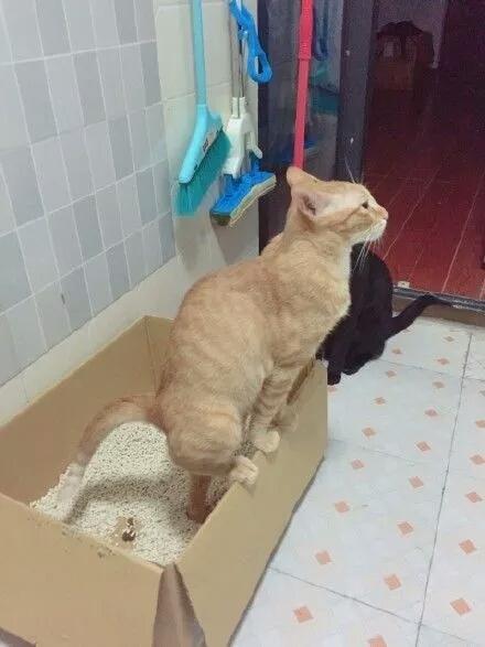 拉屎视屏_最近被这只站着拉屎的猫咪刷屏了!网友们纷纷表示不服