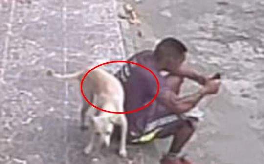 男子路边玩手机太入神 被狗狗误认为是消防栓尿一身