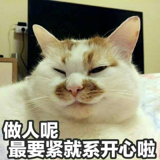 不如吸猫,它带着轻蔑的小眼神配上任何表情包语句,都能成为斗图必备.