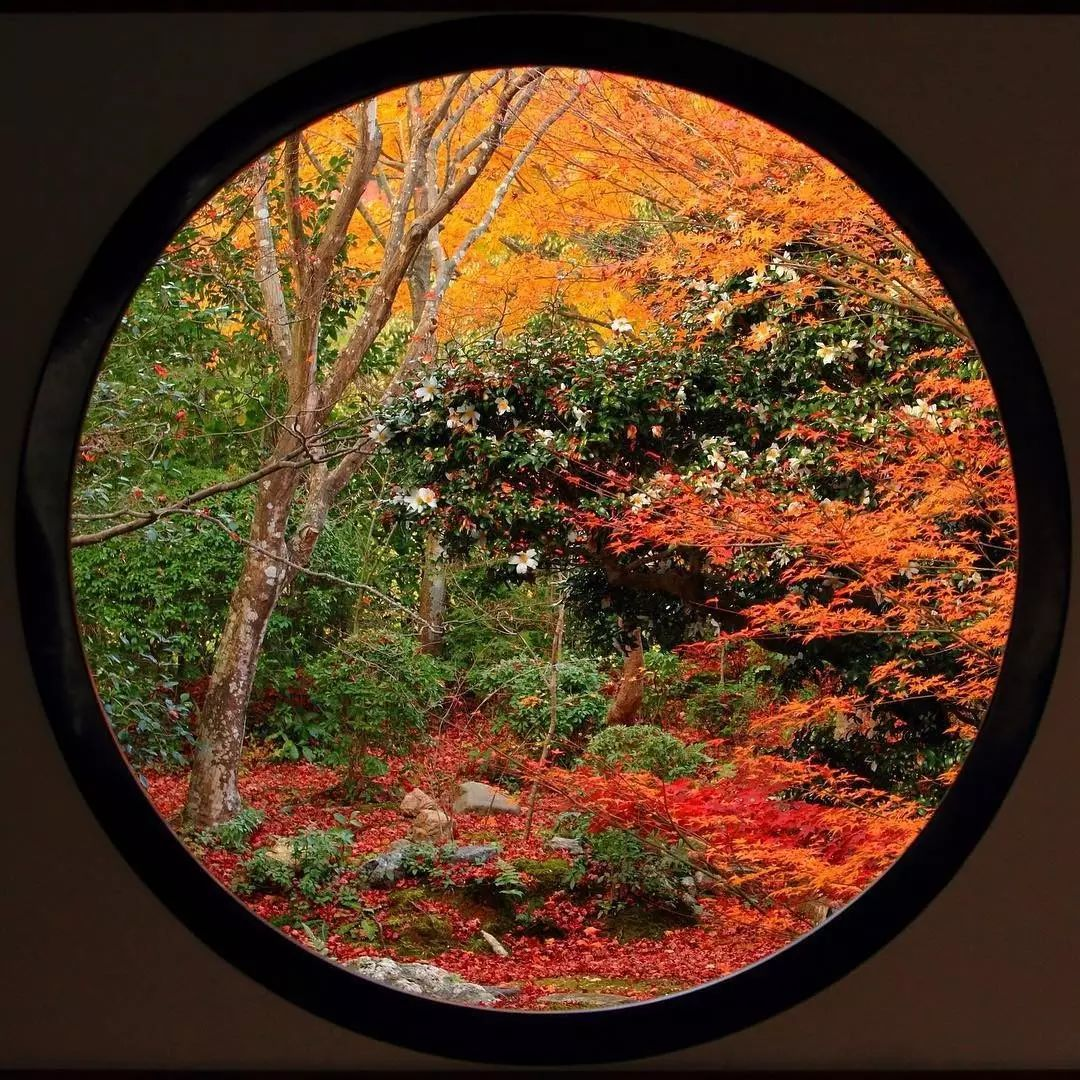 京都︱正是红叶怒放时,最撩人不过京都那一抹红