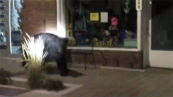 """有熊出没!胖黑熊深夜""""逛街"""" 每家店都看一遍""""挑圣诞礼物"""""""
