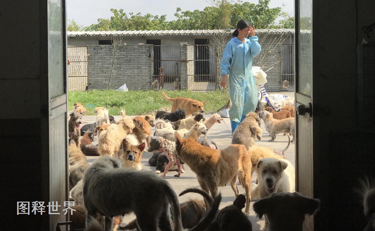 """宁波女警犬训导员 变身1300条流浪狗的""""妈妈"""""""