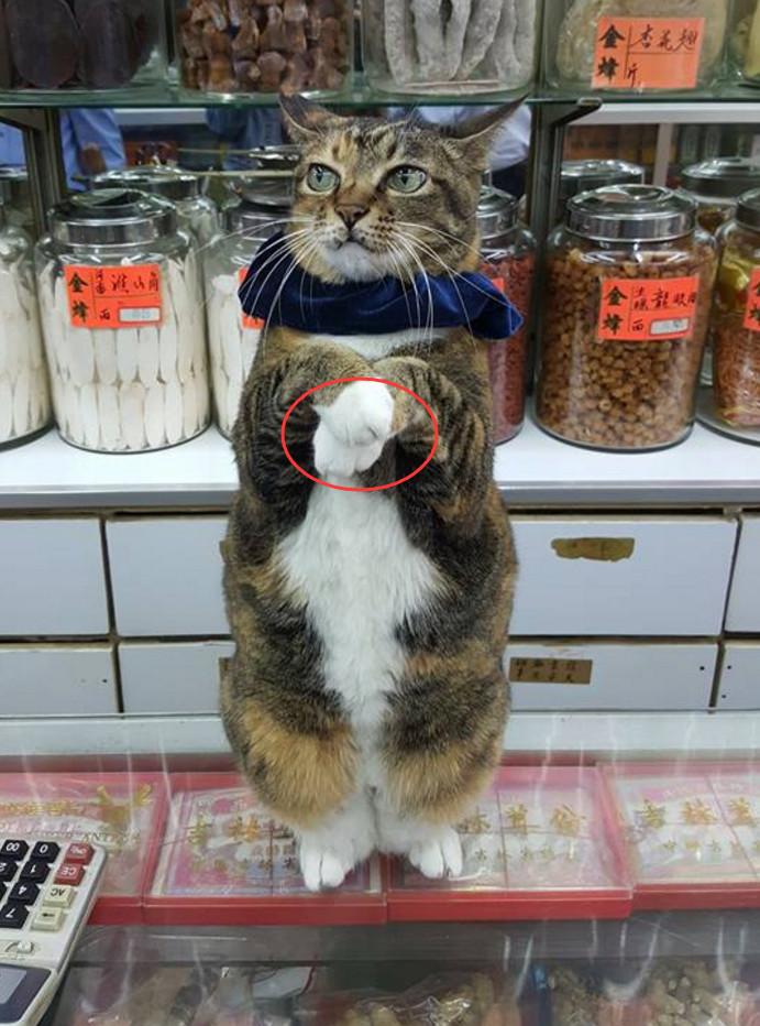 猫咪帮主人看摊,为了招揽生意,它还主动向顾客卖萌