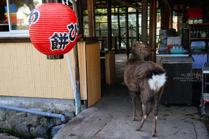 日本|奈良・秋天的童话