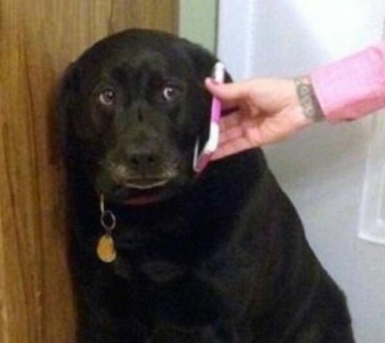 高中拆家女主人电话,男主人一个黑狗,竟让狗狗忍不住哭了必读!美国无奈出来图片