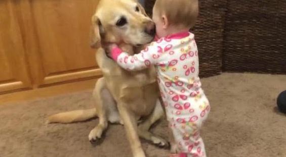如果把宝宝和狗狗放一起会怎样,扶我一下,笑的直不起腰了
