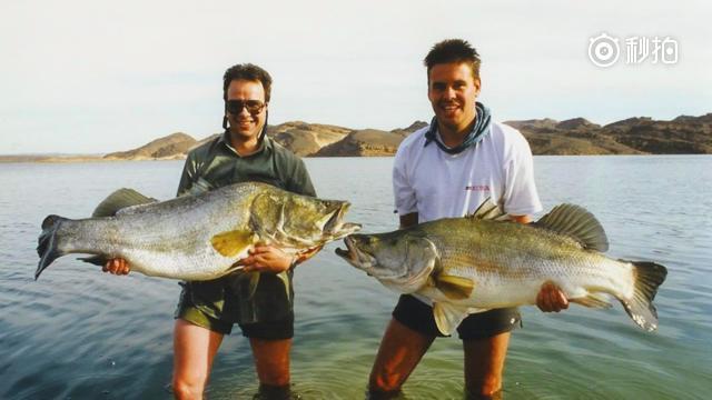 世界入侵最严重的5种鱼类,国外网友纷纷留言快请中国人来帮忙!