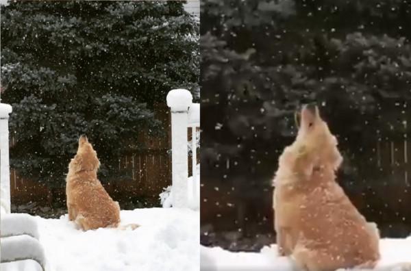 狗生的第一场雪 忙碌背影萌翻网友