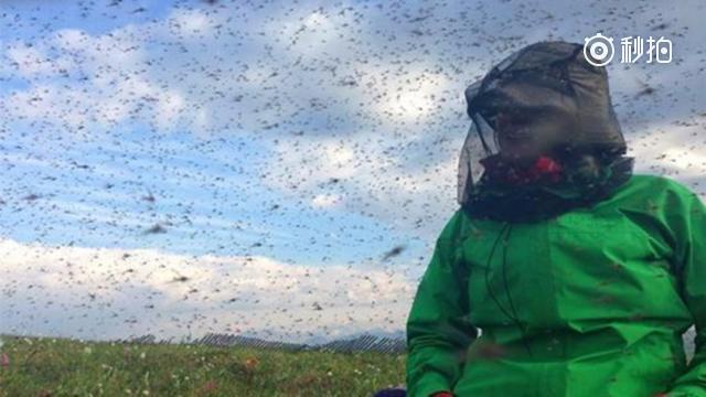 """美国阿拉斯加州的""""食人巨蚊"""",任何动物都会被瞬间吸成干尸!"""