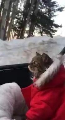 主银载着喵星人去看雪,第一次看到雪景的喵星人都懵逼了...