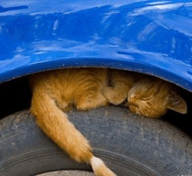 汽车长时间不用会出哪些大问题?爆胎触电可不是小事