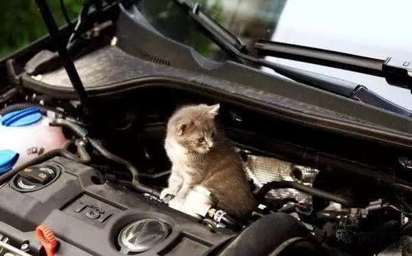 又到了小动物钻车底的季节,稍不注意,保险公司就不赔了