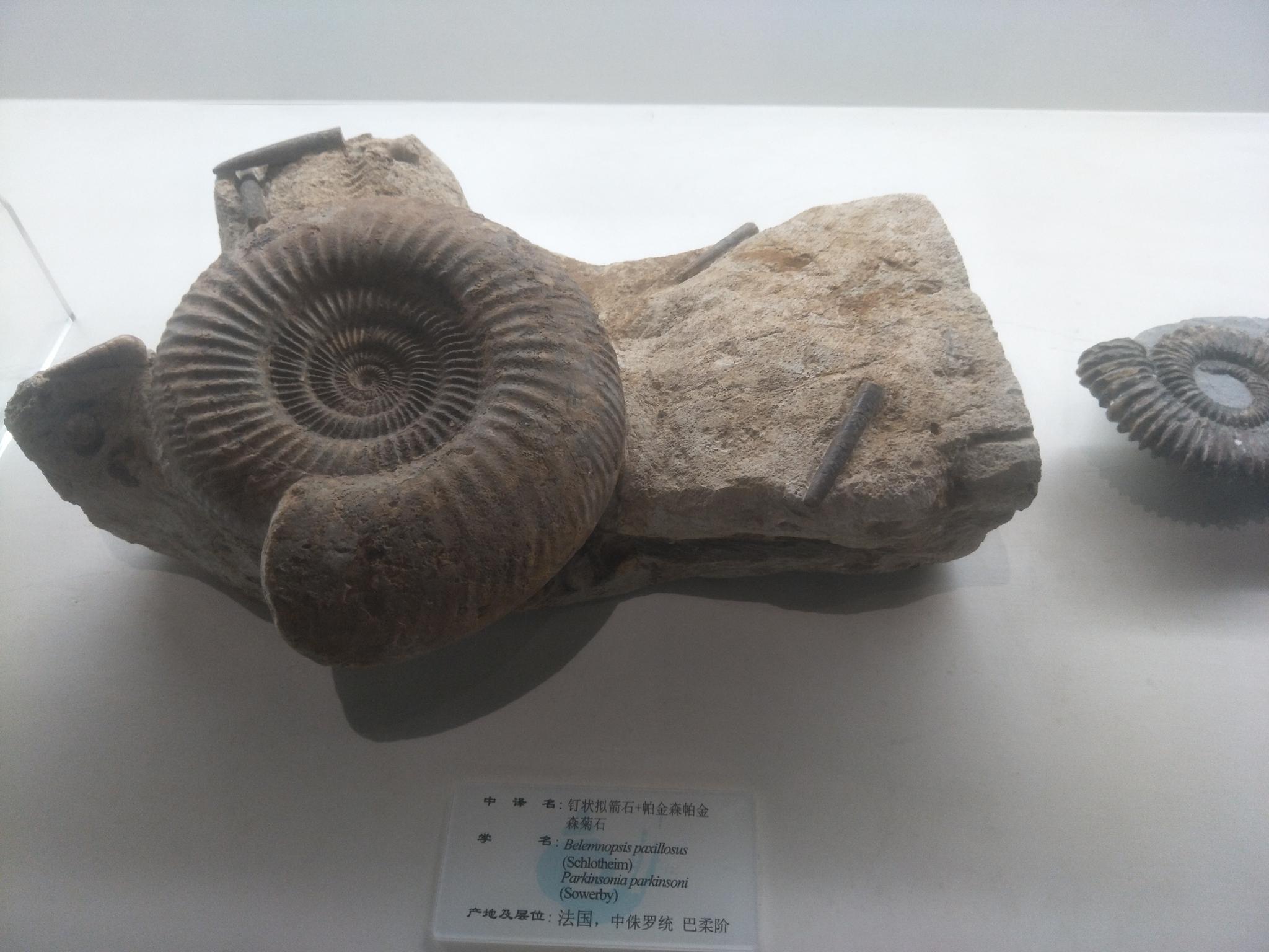 大连星海广场贝壳博物馆各种贝壳化石,原创摄影
