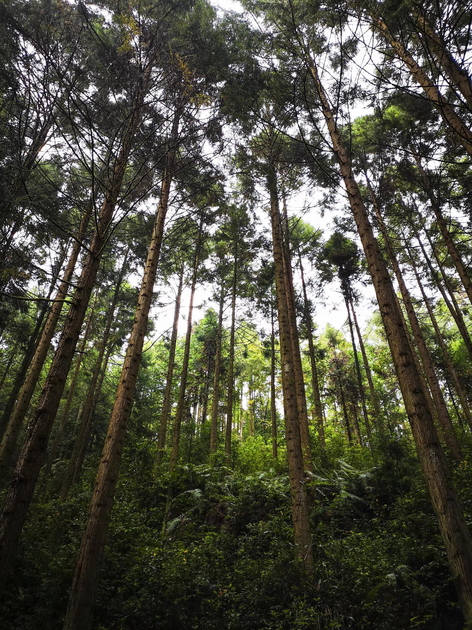 探寻自然之美,探秘腾冲可持续发展森林旅拍
