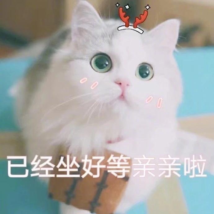 猫咪表情包 | 撒娇专用敲可爱