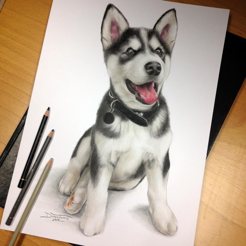 彩铅画大神手绘的各种品种的狗来给春节添