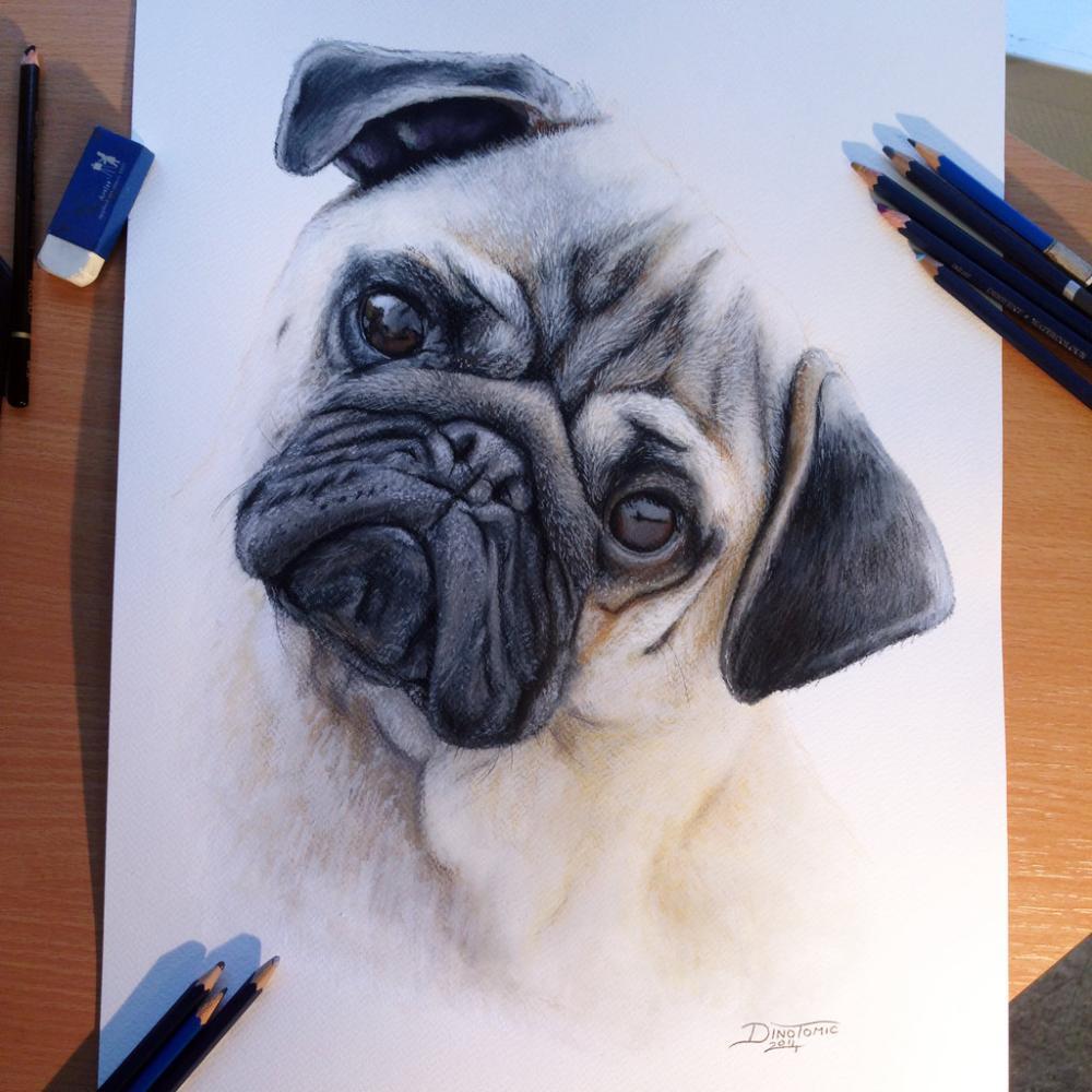 彩铅画大神手绘的各种品种的狗来给春节添添旺气!
