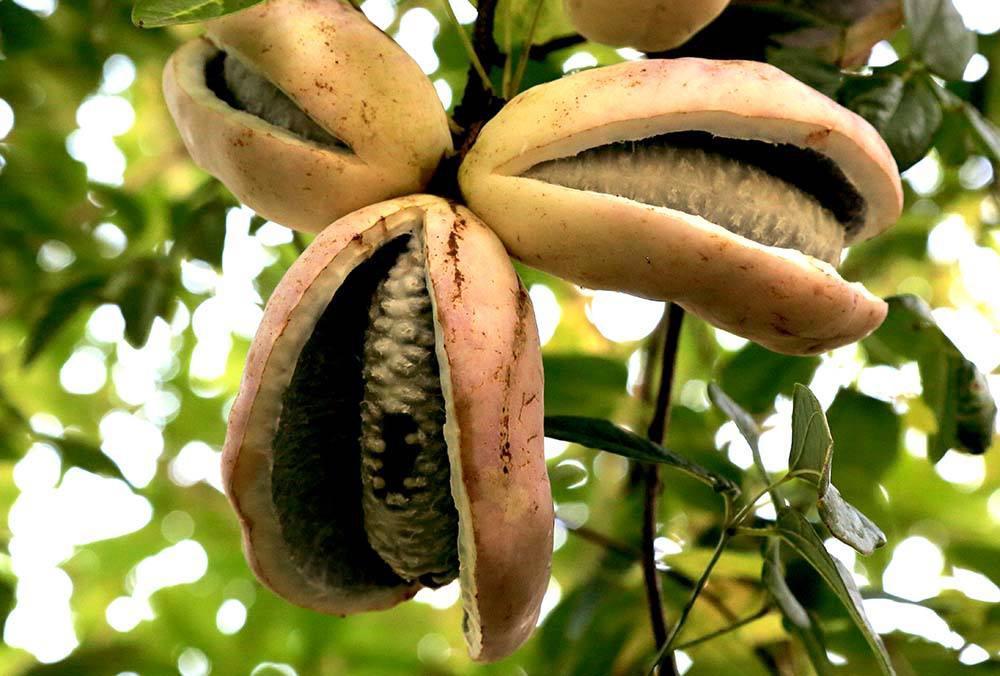 这些奇特的水果你见过吗?奇特长相的背后隐藏着不为人
