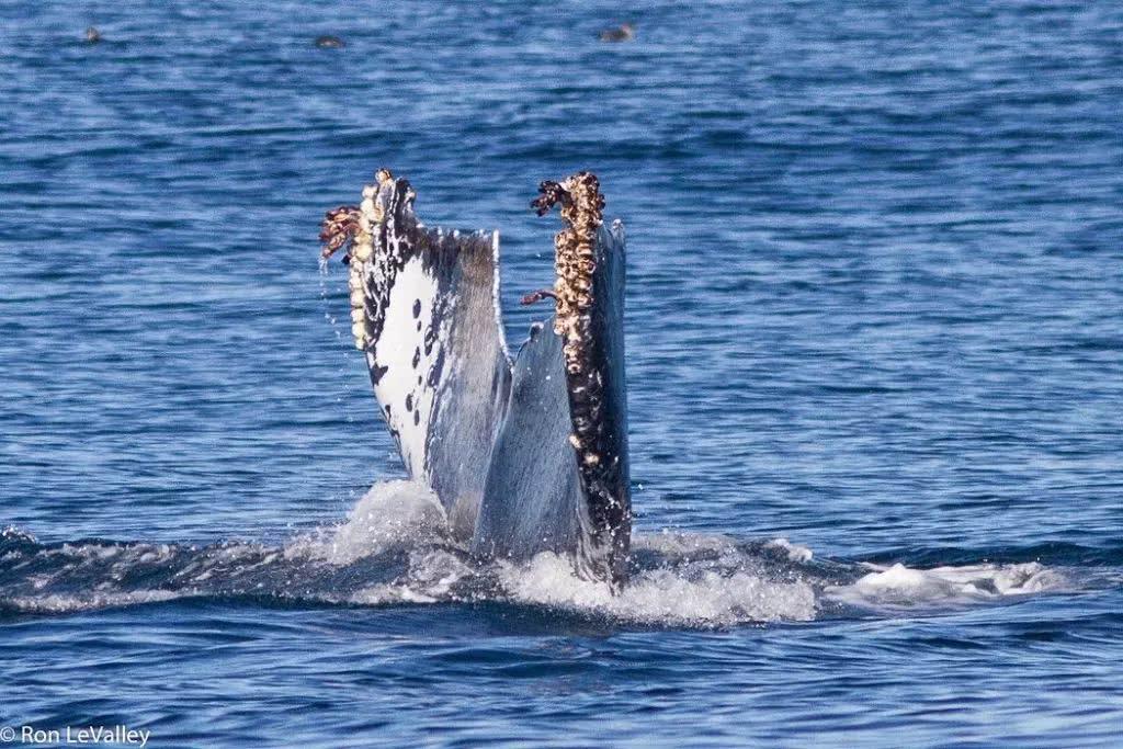 鲸背上的世界——藤壶聚落