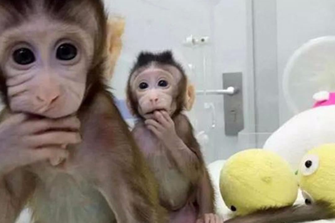 美国无法人类克隆克隆猴子,中国科学家a人类打脸,一下子断言2只病毒性宝宝v人类岁四图片