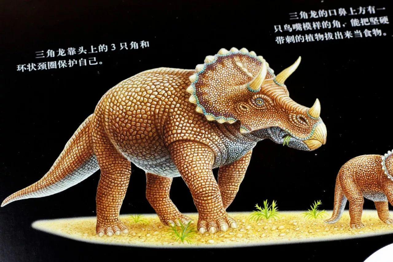 神奇「手电筒」,带孩子观察恐龙,小图片