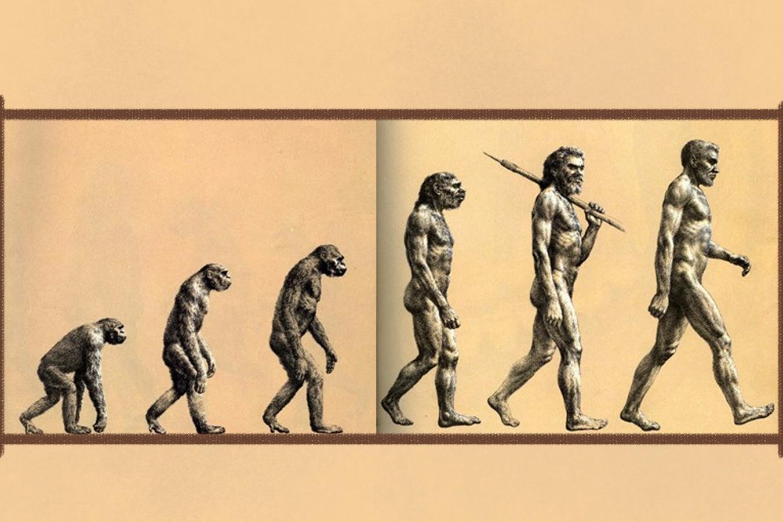 99%的人都错了!!! 人的进化历程不是这样的
