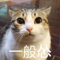怕老鼠的猫各种表现,猫猫怂货表情包图片
