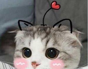 最近很火的表情包:可爱猫咪系列图片