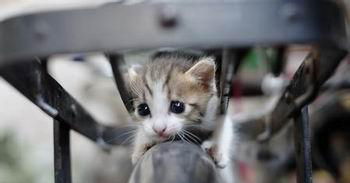 小猫被困高树4天 市民锯树解救