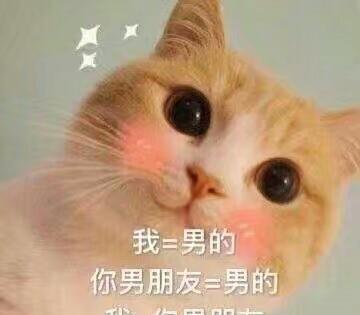 猫小妹:我不是你最爱的小甜甜了想你呢表情包图片