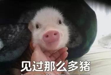一个充满猪叫的表情合集的我知道不并表情包图片
