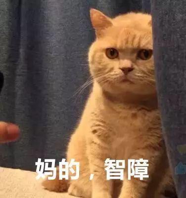 橘猫,柴犬.二哈……最全表情包,助你斗图战无不胜!
